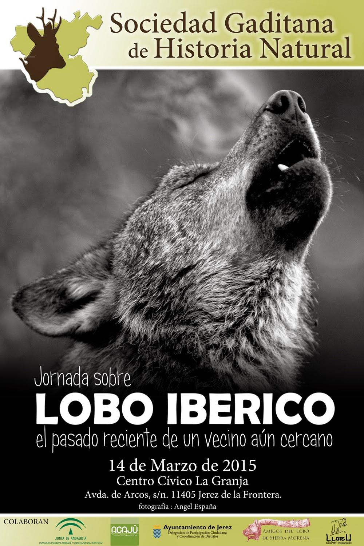 Conocer gente el lobo garota procura foder Jundiaí-72751