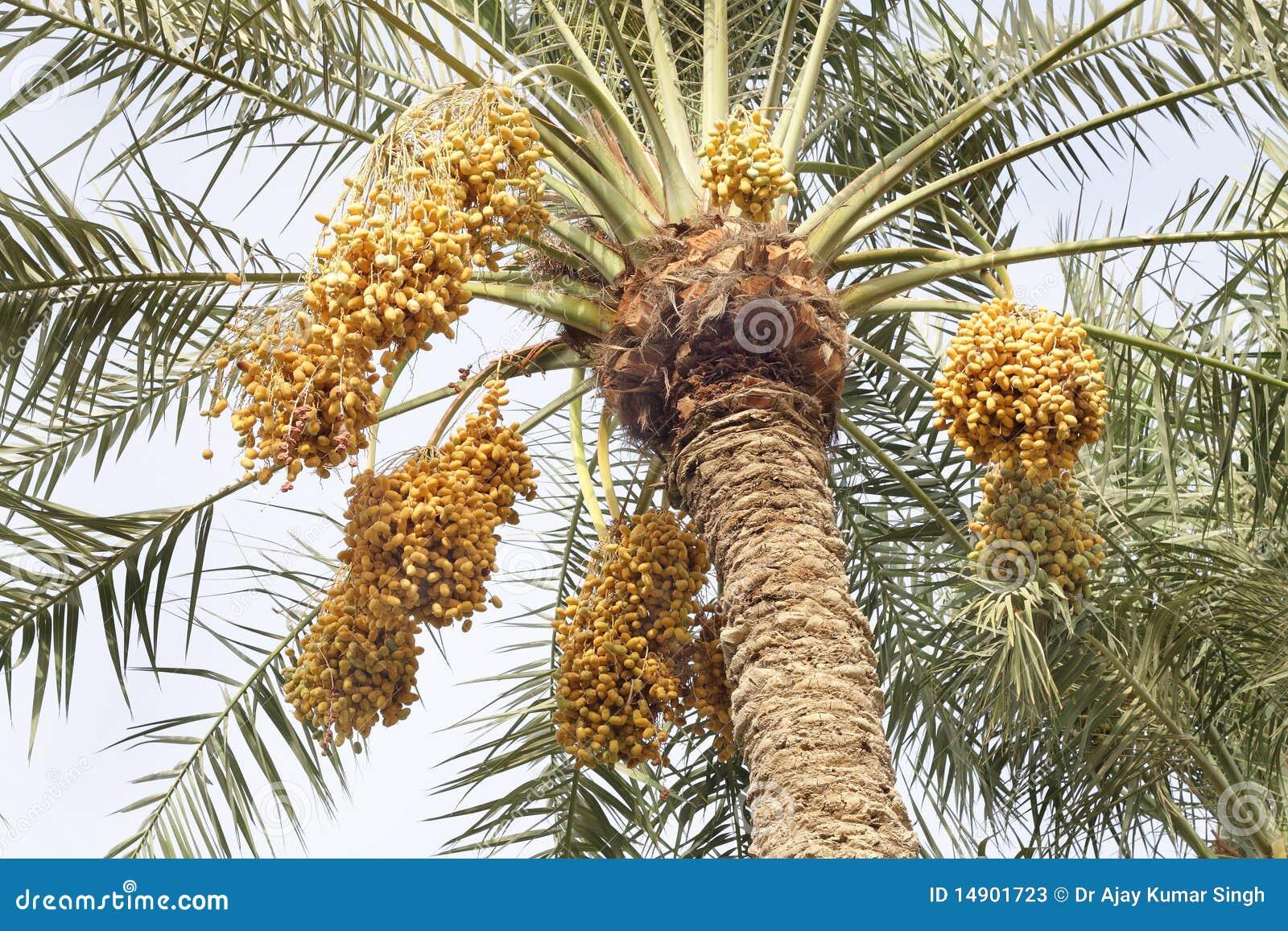 Dating in palma massagem tantrica Aracaju-60211