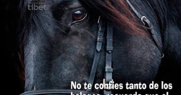 El hombre solo acaricia el caballo para poder montarlo pareja busca chica Madrid-80377