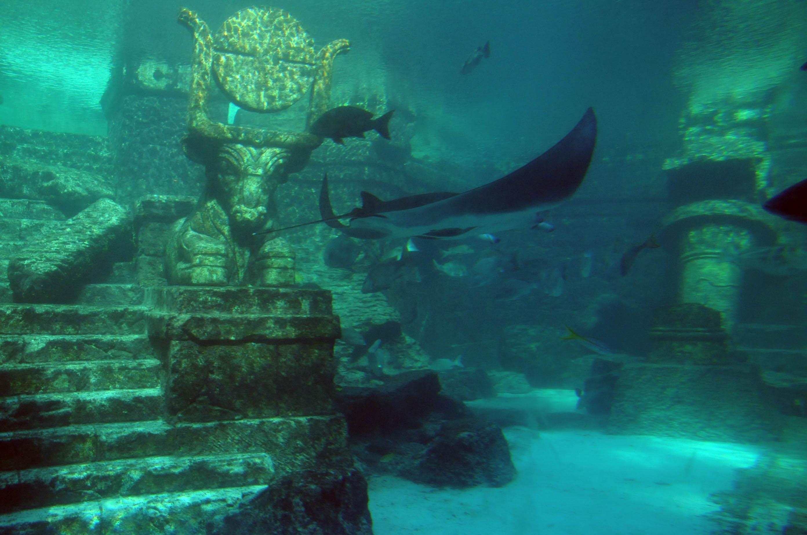 Treasure island resort & casino de isla del tesoro de 13 de noviembre de mim-43465